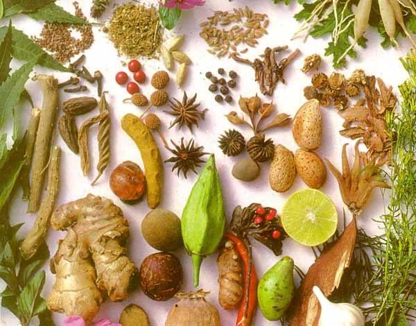 Le piante officinali per i più comuni disturbi - L'Erborista