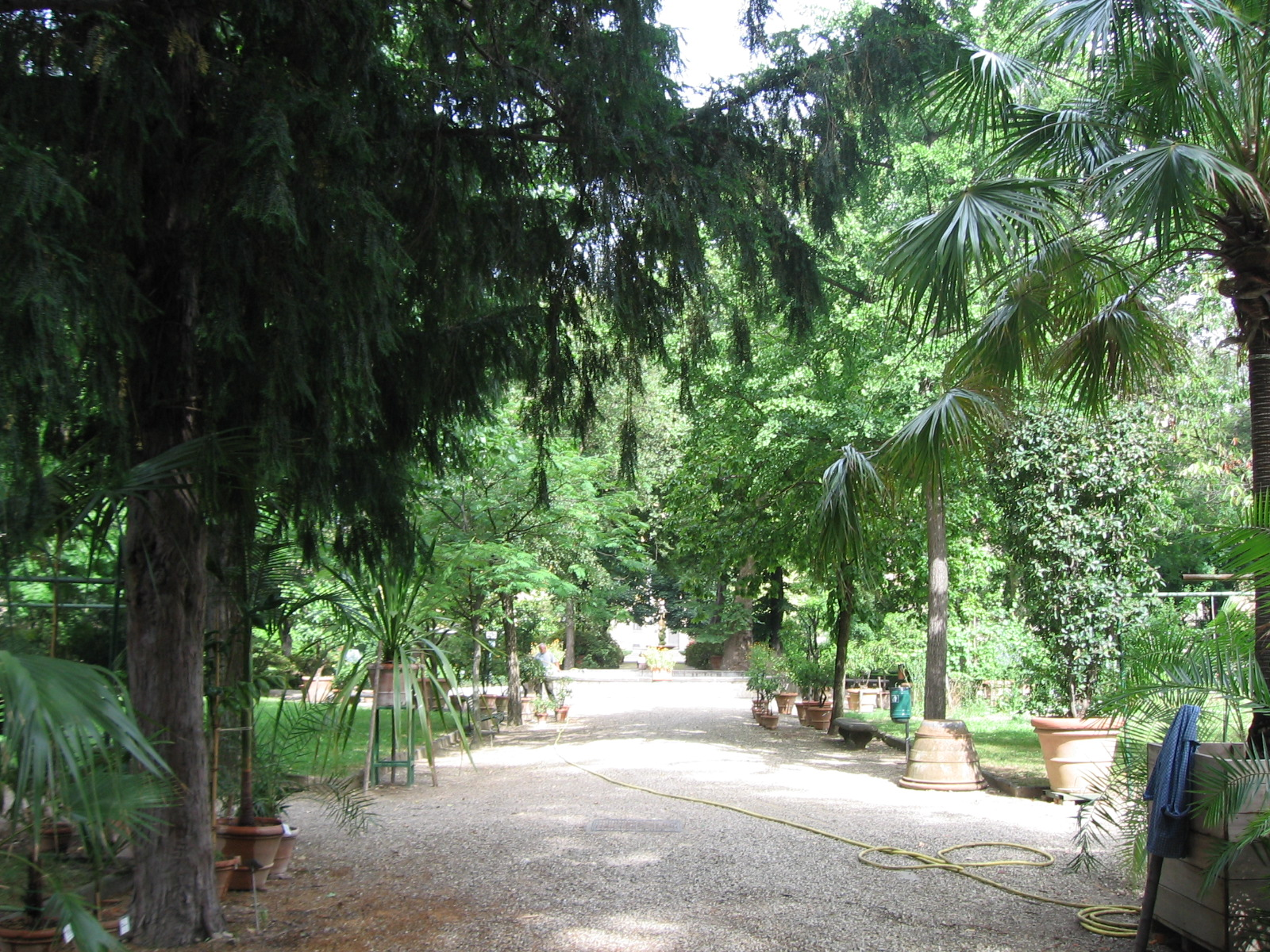 Lorto botanico di firenze festeggia 470 anni lerborista
