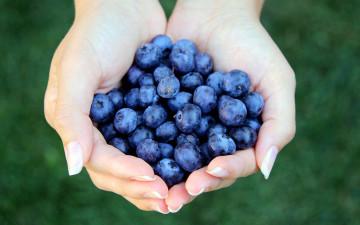 Consumo di frutta e verdura ricche di flavonoidi correlato a minor sovrappeso