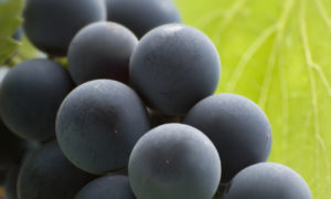 Effetti benefici dell'estratto di uva rossa